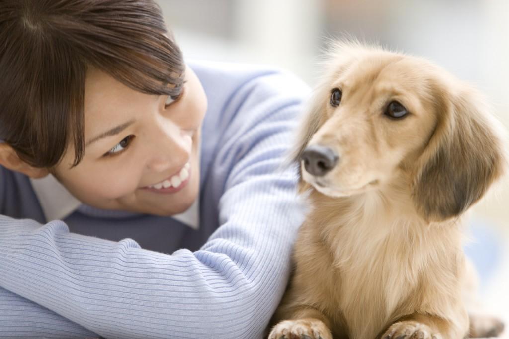 動物のために税金を使う自治体への寄付