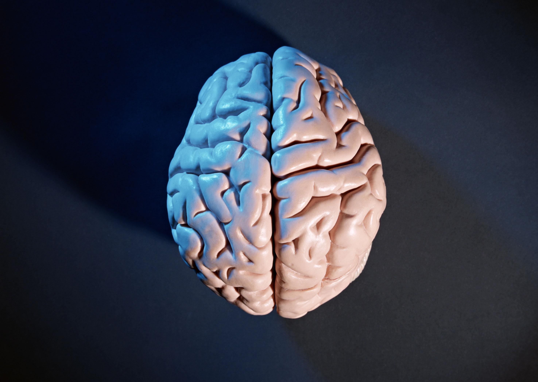 ブラック企業 人間関係 大脳